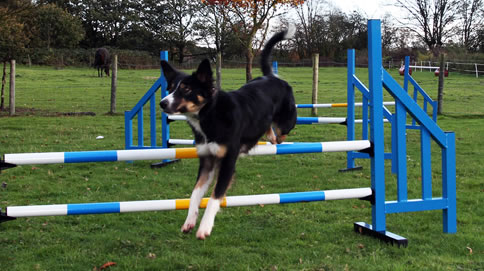 services-dog-courses